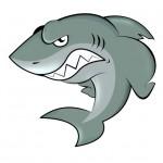 Shark-image